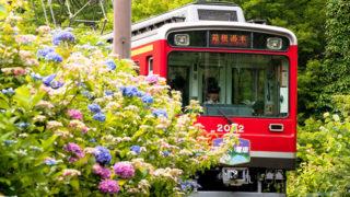 箱根 あじさい電車初夏のみずみずしい花と走るジグザグ登山鉄道