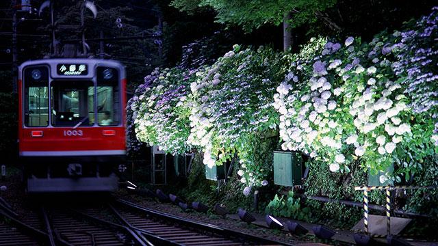 箱根登山鉄道 あじさい号