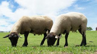マザー牧場広大な自然の中で可愛い動物と触れ合う癒し時間