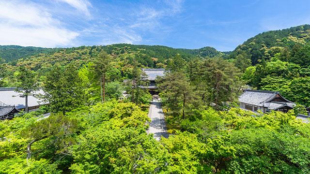 新緑の南禅寺(南禅寺)