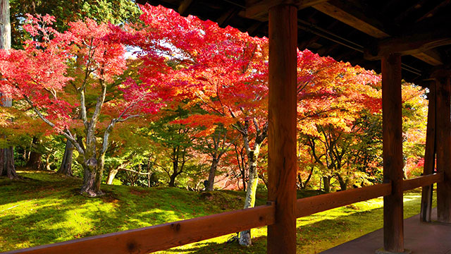 通天橋からの紅葉(京都)