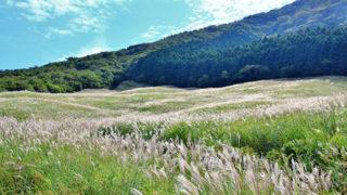 箱根 仙石原すすき草原秋になると黄金色に染まる箱根観光の名所