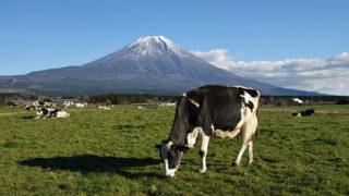 富士宮市・朝霧高原空気も食べ物もおいしい 富士山麓の観光スポット