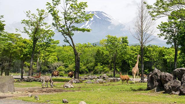 富士サファリパーク(富士宮市・朝霧公園)