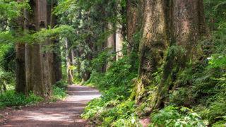 箱根旧街道 杉並木昼なお暗き杉の並木で森林浴を楽しむの