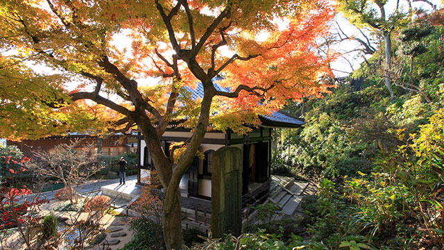 鎌倉長谷寺の秋