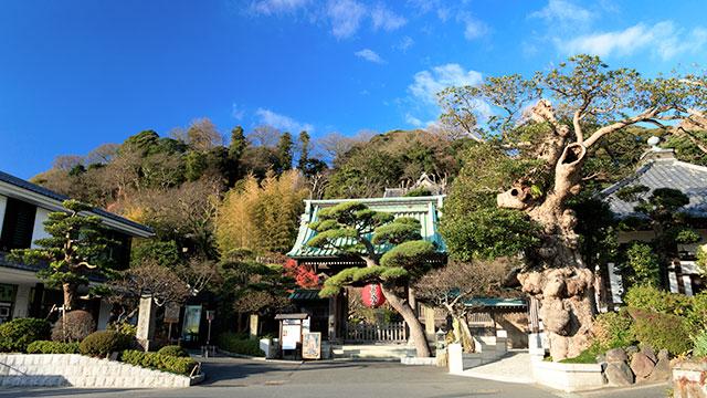 鎌倉長谷寺(鎌倉 長谷駅)