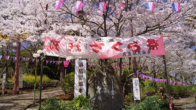 衣笠さくら祭(衣笠山公園)