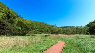 三浦 小網代の森森と湿地と干潟を川が結ぶ関東唯一の奇跡の森