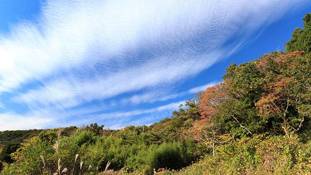 秋(小網代の森)