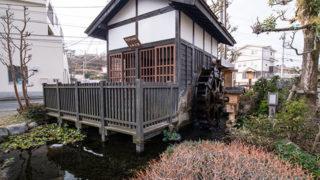 めだかの学校小田原メダカを見られる親水公園