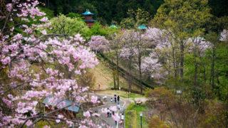 小田原わんぱくらんど自然を満喫できる公園の魅力