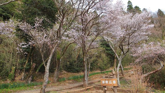 湖畔の広場(恩賜箱根公園)