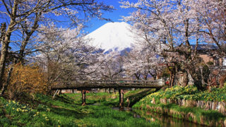 忍野お宮橋桜と富士山が望める絶景スポット