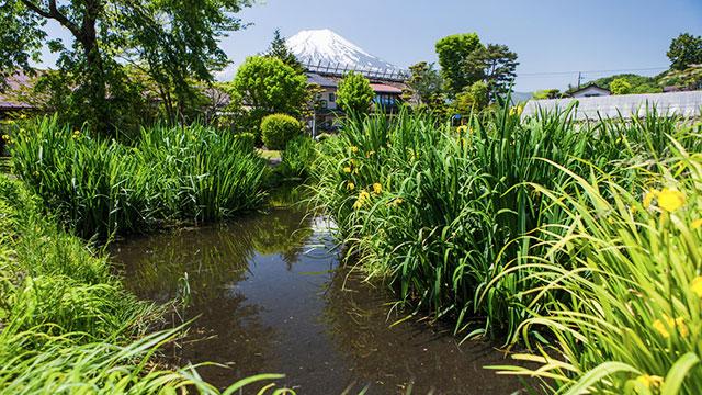 菖蒲池(忍野八海)