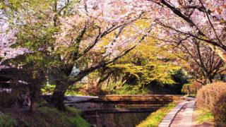 京都 哲学の道哲学人が愛した小路で四季を感じる