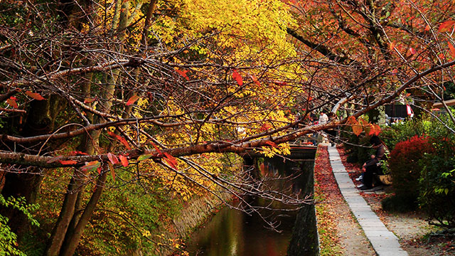哲学の道の秋