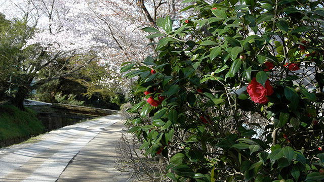 哲学の道(京都東山)