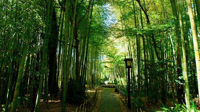 竹林の小径(修善寺)
