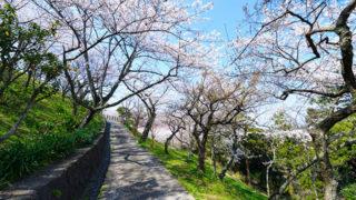 横須賀 塚山公園横須賀湾が一望できる桜スポット