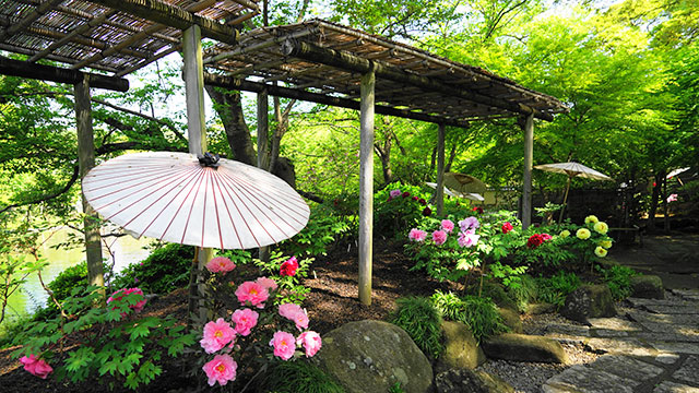 神苑ぼたん園(鶴岡八幡宮)