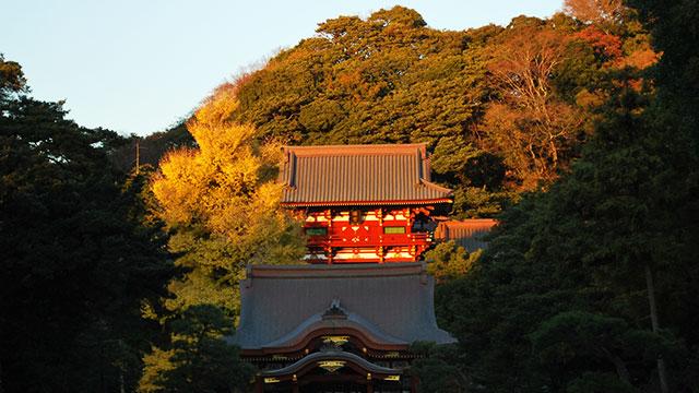 秋の鶴岡八幡宮