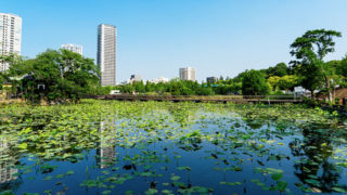 上野 不忍池江戸時代から人気の東京の名所