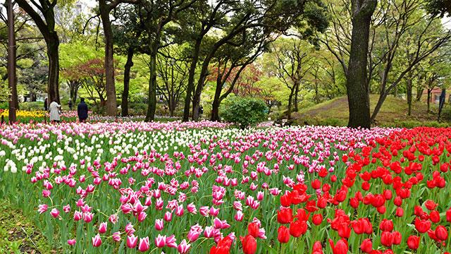 よこはま花と緑のスプリングフェア(山下公園)
