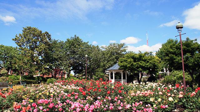 ローズガーデン(港の見える丘公園)