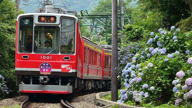 あじさい電車(箱根湯本)