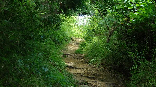 ハイキングコース(源氏山公園)
