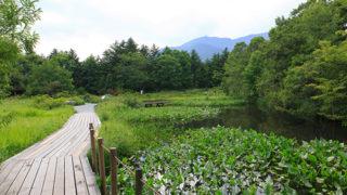 箱根湿性花園日本でただ一つの湿生植物園