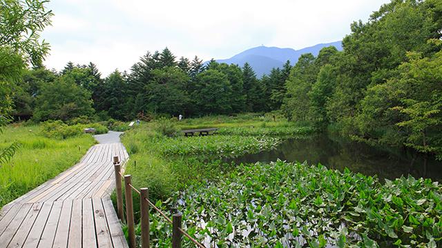 箱根湿生花園(仙石原)