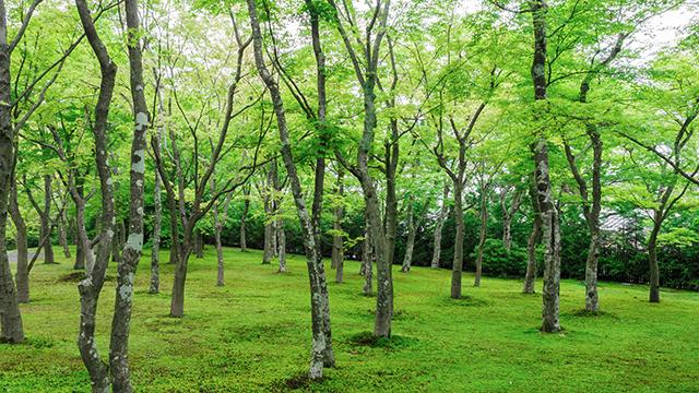苔庭(箱根美術館)