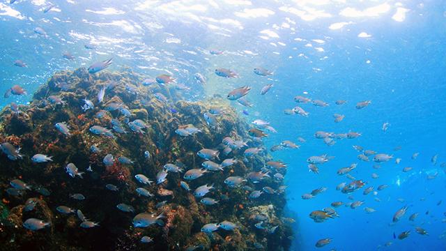 海中の生き物たち(ヒリゾ浜)