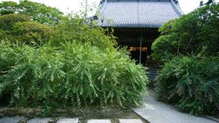 鎌倉 宝戒寺坐像の地蔵菩薩がある萩と梅が美しい寺