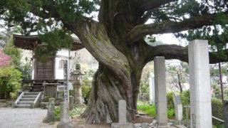 湯河原 城願寺樹齢八百年の巨木がある湯河原の史跡