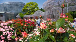 小田原フラワーガーデン一年中花と緑が楽しめる植物公園の魅力
