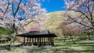 さくらの里40種類のさくらが咲く美しい公園