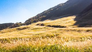 仙石原観光金時山南麓に広がる高原地帯を3倍楽しむ!