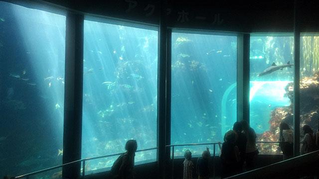 アクアドームペリー号内の水槽(下田海中水族館)