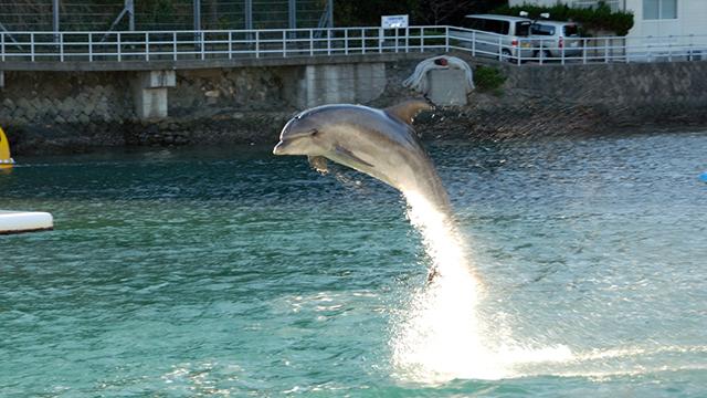 イルカショー(下田海中水族館)