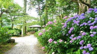 下田公園北条氏の城跡に造られたあじさいの名所