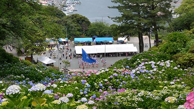 あじさい祭り(下田公園)