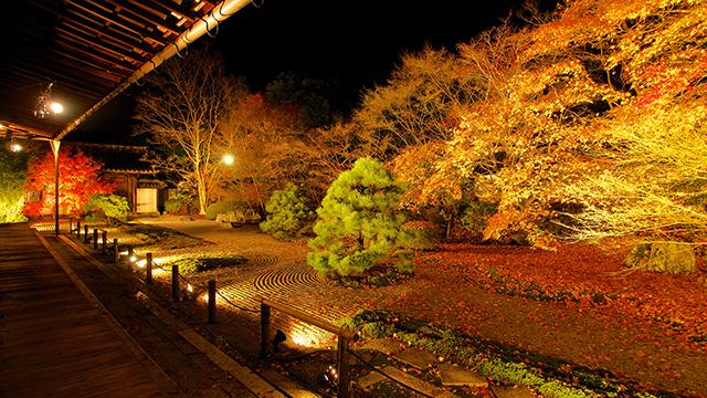 方丈庭園のライトアップ(天授庵)