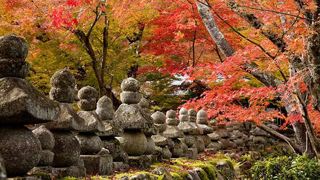 化野念仏寺の秋(化野念仏寺)