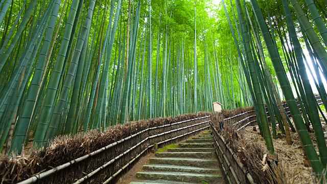 竹林の小道(化野念仏寺)