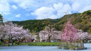 京都 嵐山公園川岸や中州に広がる桜と紅葉の名所