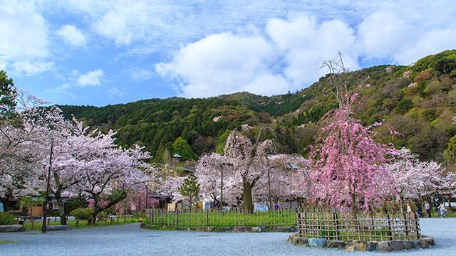嵐山公園(嵐山)