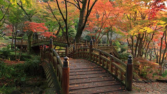 日本一遅い紅葉(熱海梅園)